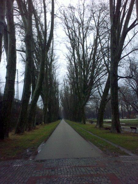 park_allee