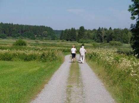Vom Aussterben bedroht: Nordic Walker