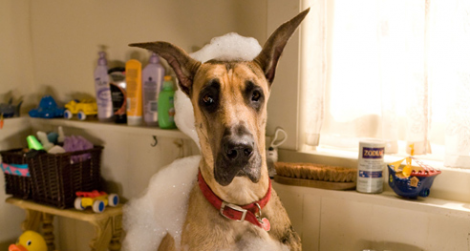 Marmaduke oder mein Hund der Filmstar
