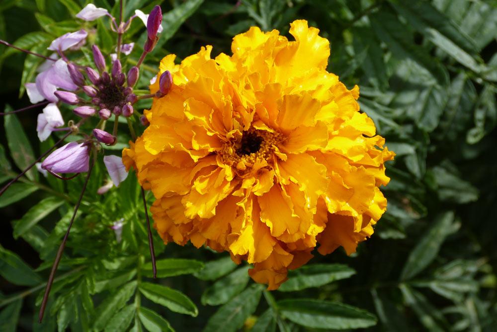 Bin so ein guter Blumenfotograf geworden (zum zweiten).