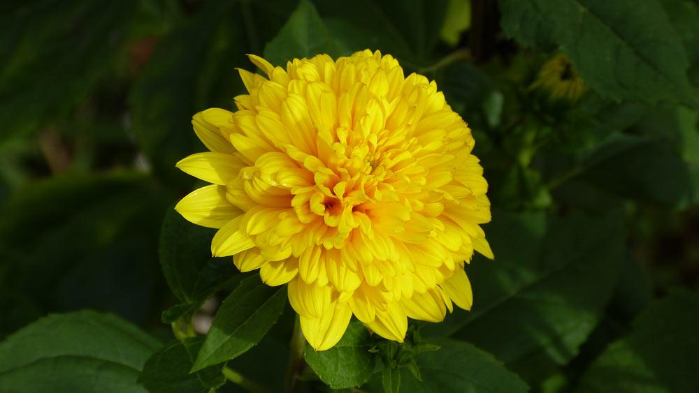 Bin so ein guter Blumenfotograf geworden.