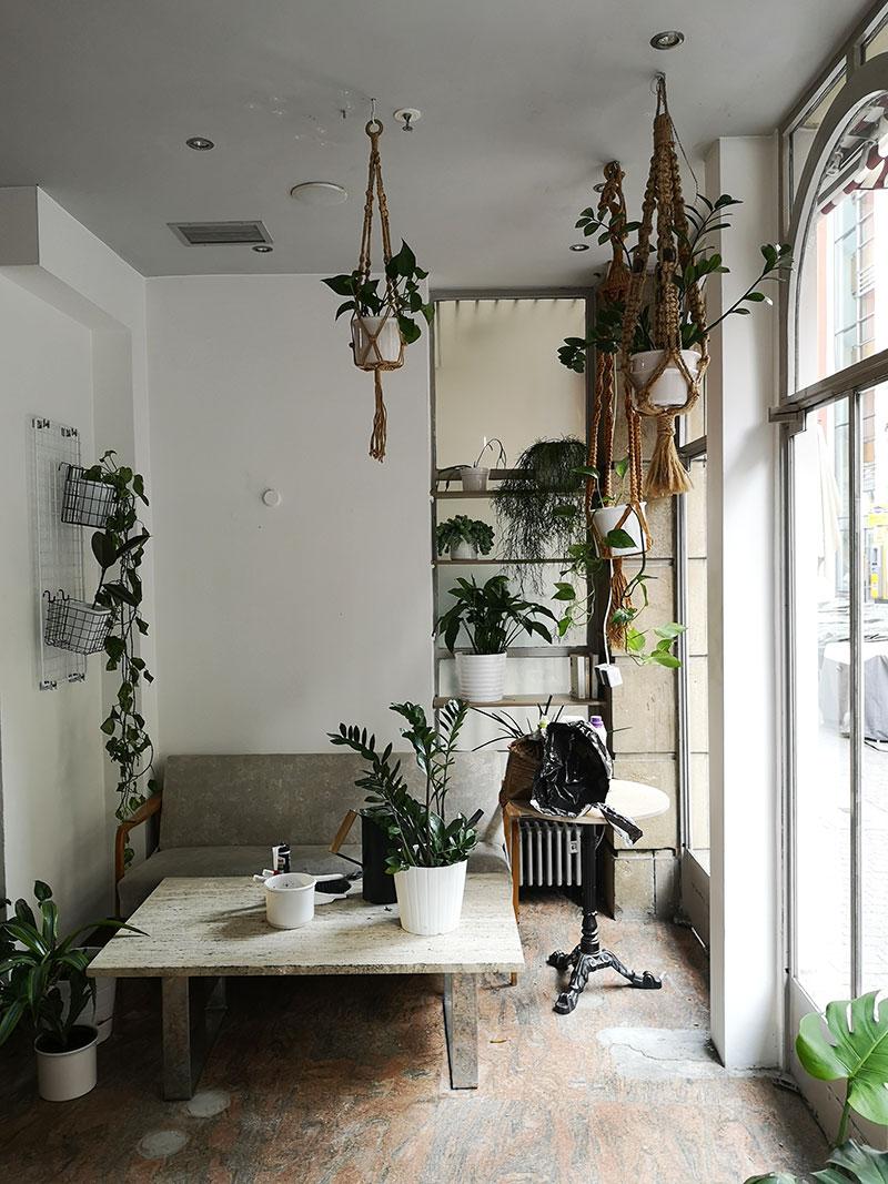 Pflanzen plus cosy gleich Pfosy aka Holzapfel.
