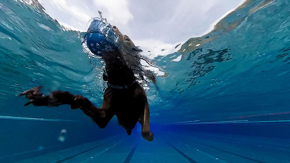 190915Hundeschwimmen01