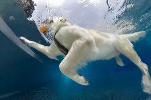 Ende der Freibadsaison: Hundeschwimmen Böblingen