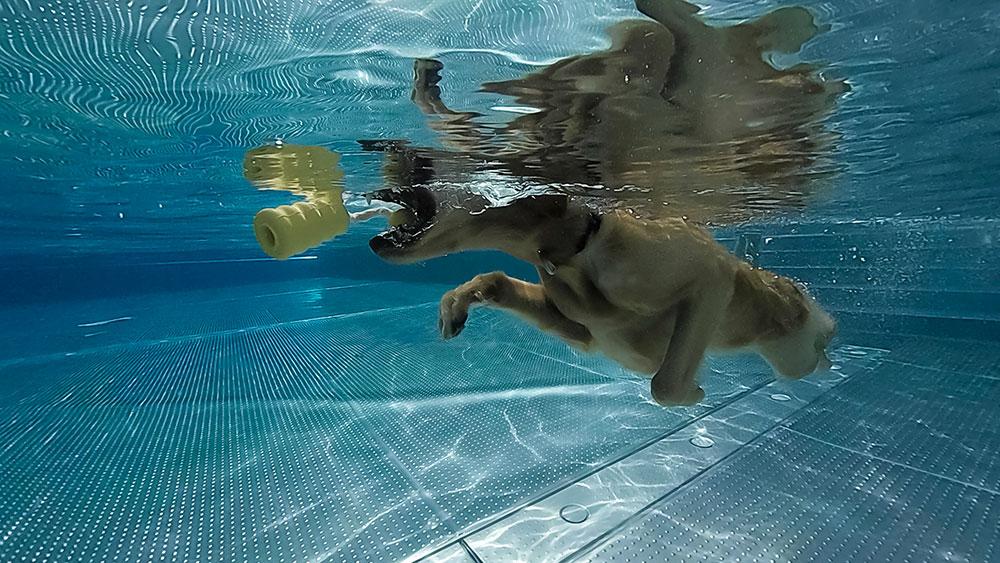 190915Hundeschwimmen15